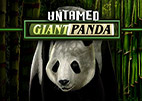 untamed giant panda