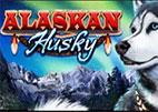 alaskan-husky