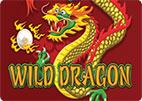 wild-dragon