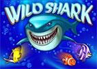 wild-shark
