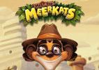 meet-the-meerkats