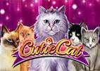cutie-cat