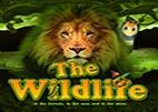 the-wildlife