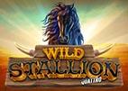 wild-stallion