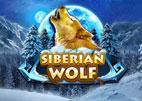 siberian-wolf
